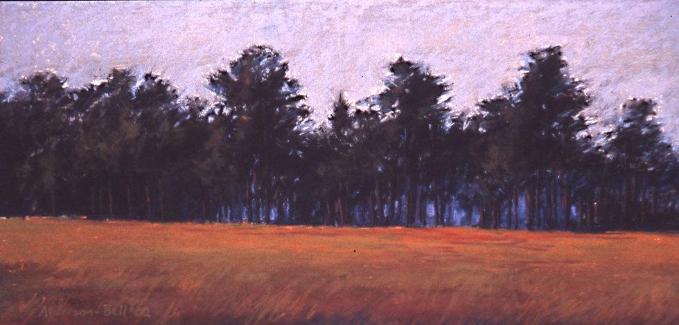 Great Pine Treeline