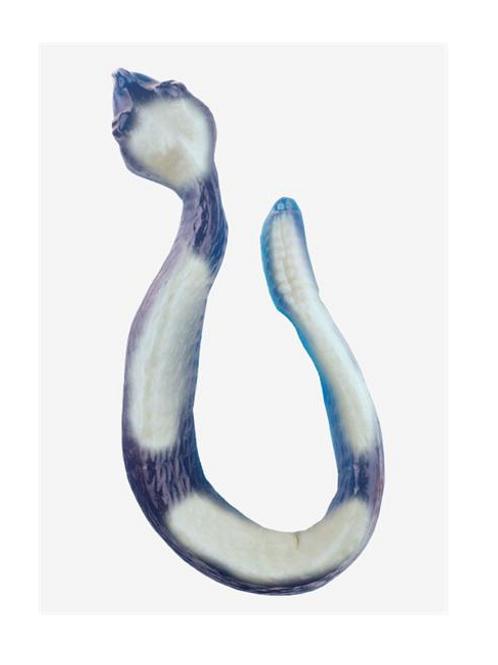 Gummy Rattlesnake (White Banana Strawberry on Blue Raspberry)