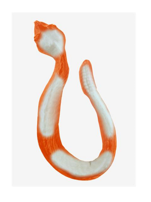 Gummy Rattlesnake (White Banana Strawberry on Orange)