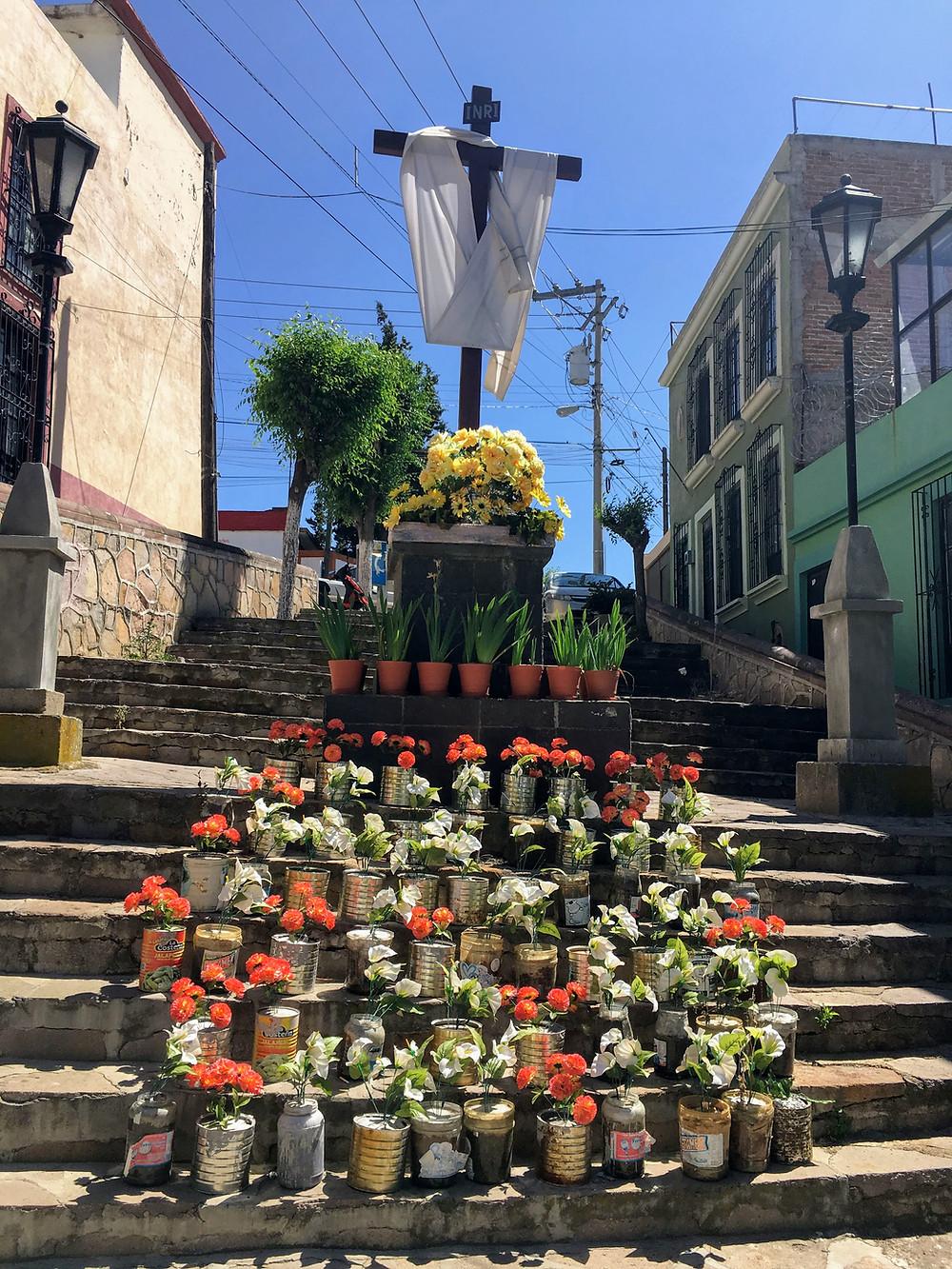 Zacatecas, Flowers, Mexico