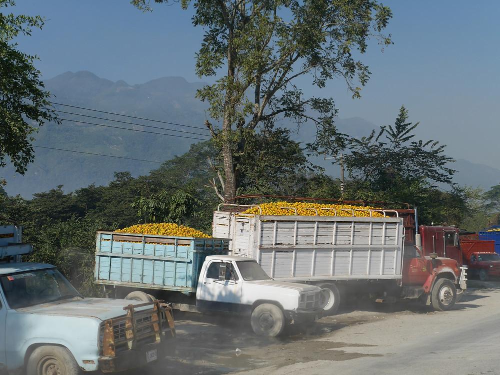 Tamosopo roadside fruit vendors in mexico