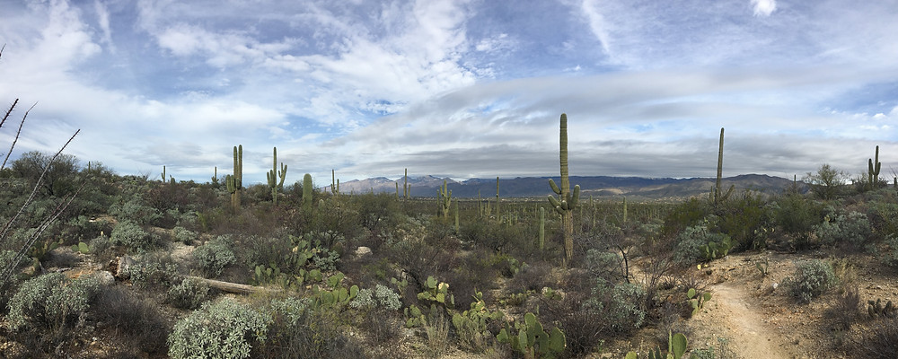 desert scenery schot tucson arizona saguaro national park east