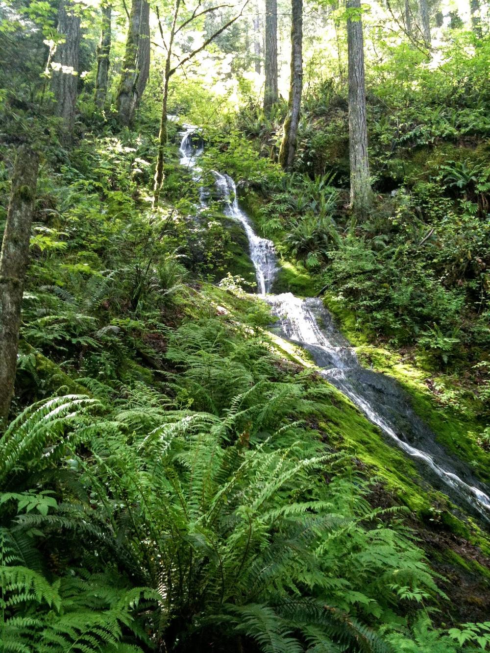 Issaquah, Washington State park forest creek stream hike