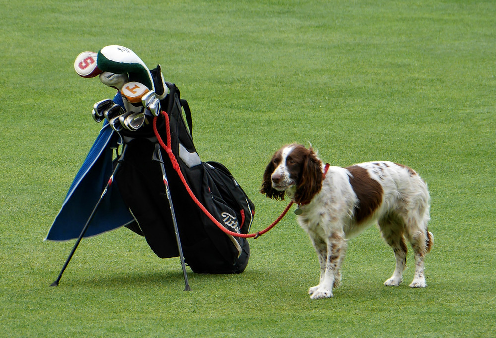 St. Andrews Golf course Scotland puppy caddie