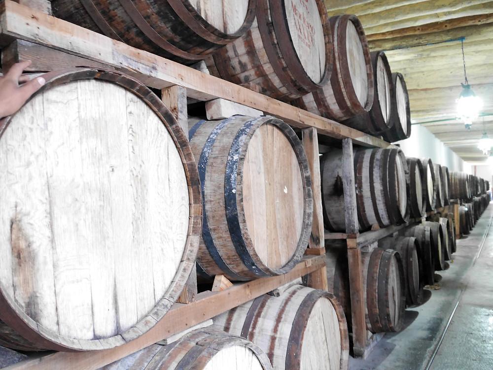 Casa Madero, barrels of wine at the winery, Coahuila, Mexico