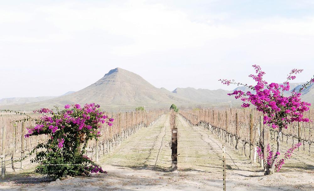 Casa Madero wine estate, Coahuila, winery Hacienda de San Lorenzo, Mexico