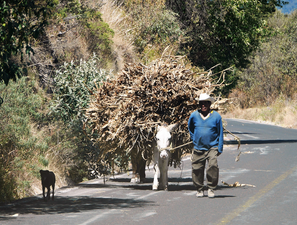 Man walking dog and mule alongside the road Mexico