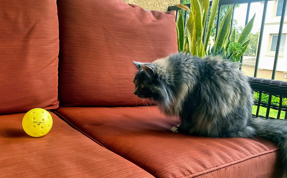 Cat staring at yellow pickleball on orange couch