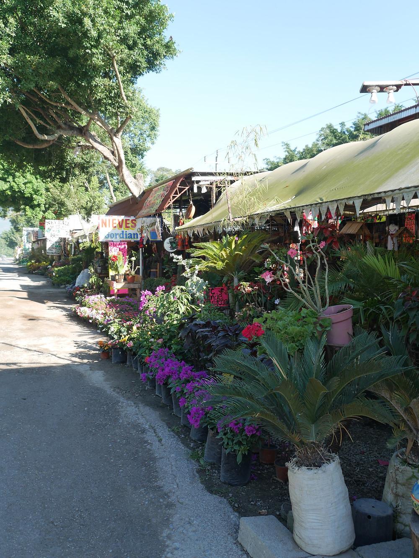 Tamosopo roadside florist in mexico
