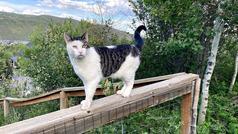 Beautiful cat on a fence