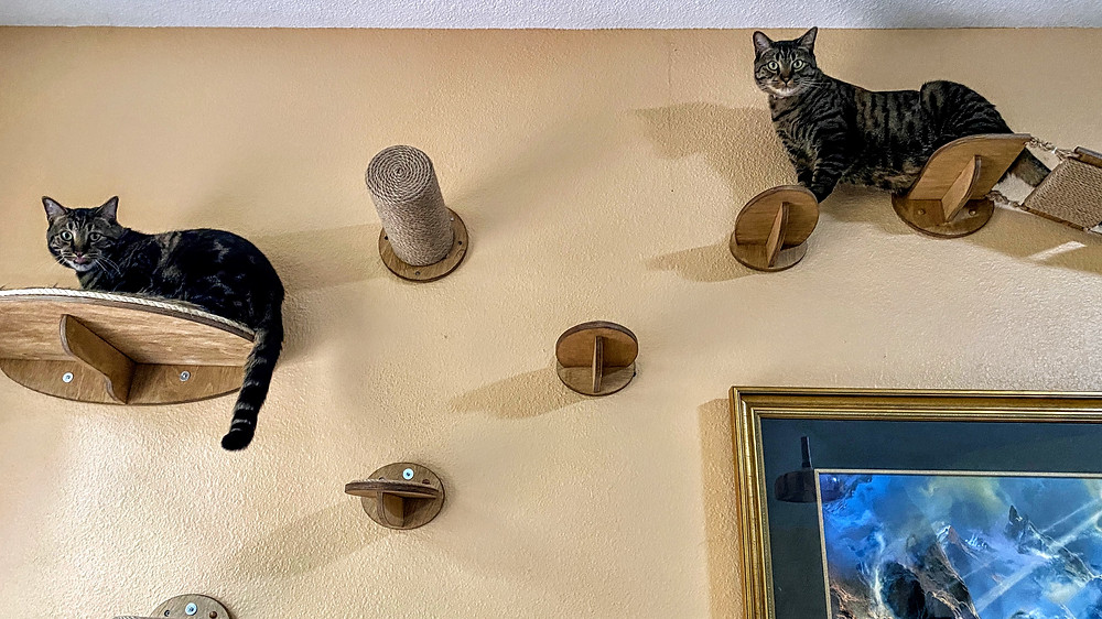Cat Wall Pet Sitting Coffeys2Go.com Sitters Blog