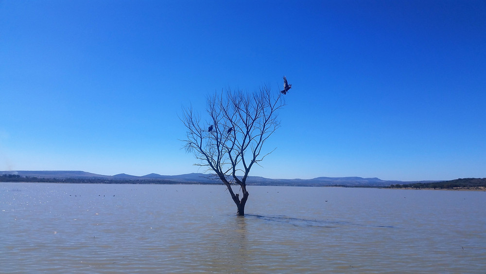 bird perched on a tree in a lake in mexico