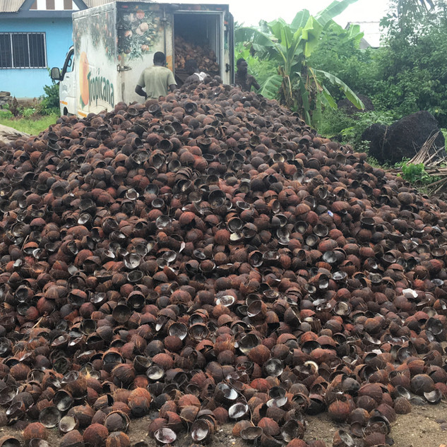 Collection of Mature Coconut Shells - KDHI