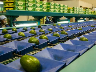 Importance of Traceability Technology for Agriculture in Africa
