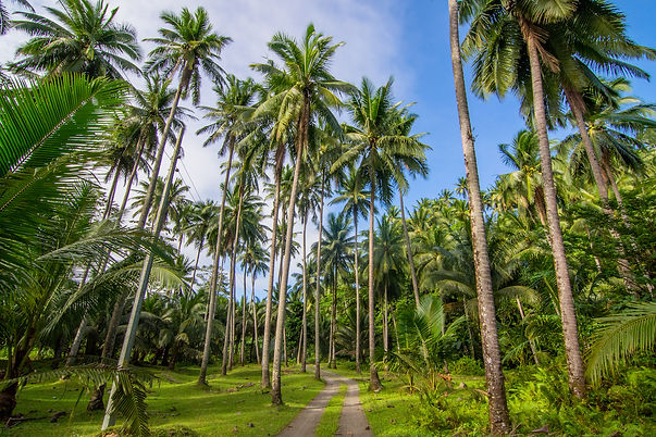 Coconut Farm.jpg