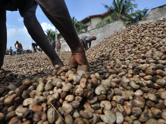 Leading Global Value Chain Company Engages KDHI to Source Raw Cashew Nuts in Ghana