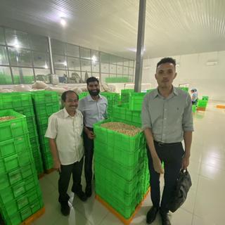 Vietnam Raw Cashew Nut Purchaser - KDHI