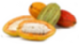 Cocoa Pod Transparent.png