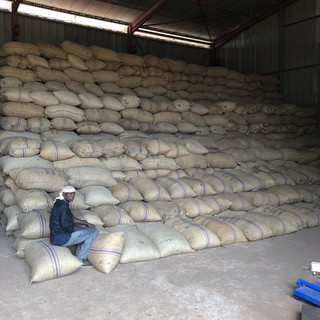 Raw Cashew Nut Loading in Export Warehouse - KDHI