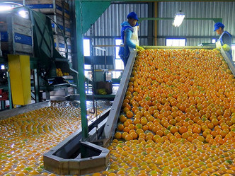 Limits to Growth in the Agro-processing Sector