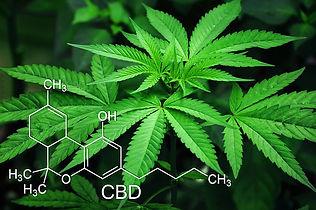 marijuana-3678222_640(1).jpg