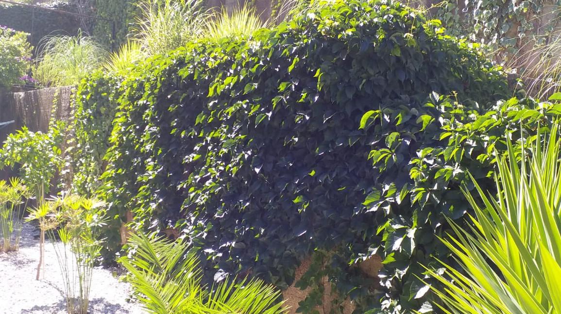 Estbalished gardens