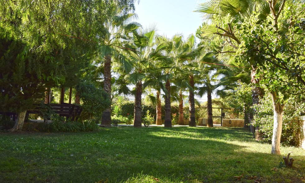 Abundance of Palms, Plants & Fruit Trees