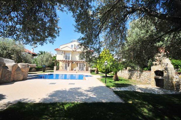 18. mature olive trees.JPG