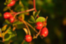 Pflanzen Kräuter für Tiere