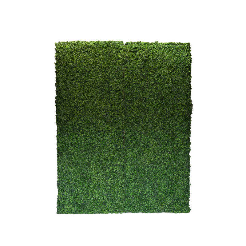 Boxwood Hedge Wal