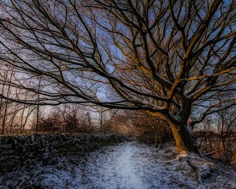 winter tree-Edit.jpg