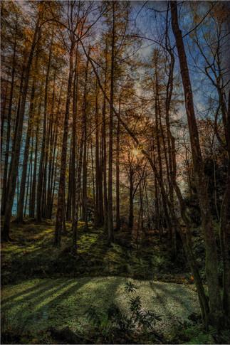 Pine Stand-Edit.jpg