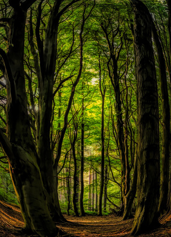 deffer beech wood 2a-Edit.jpg