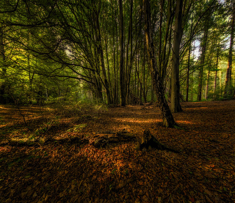 deffer beech wood-Edit.jpg