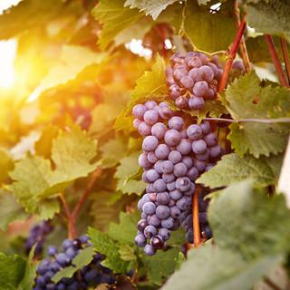 PIC-Grapes.jpg