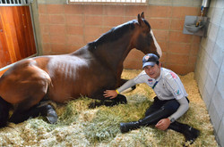 Relaxing in Incheon Stable