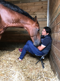 Resting back in Stable at Deauville