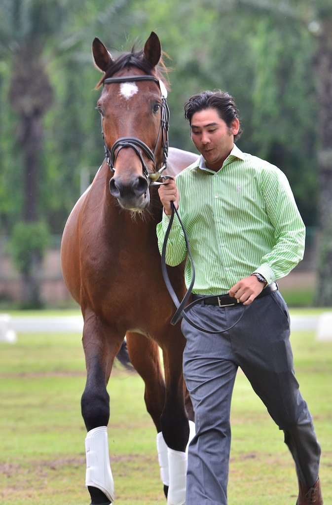 Trot up with Ridano Elmy