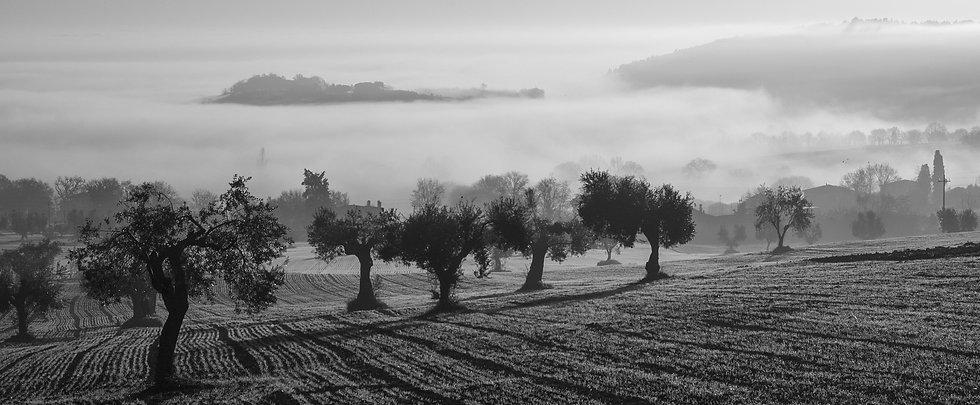 olive-harvest-1755121_1920.jpg