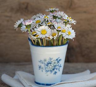 daisies-1346049_1920.jpg