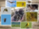 Wildlife_edited.jpg