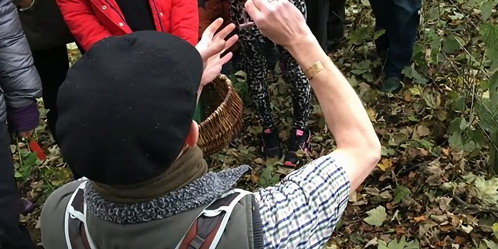 Spring Foraging with Fred