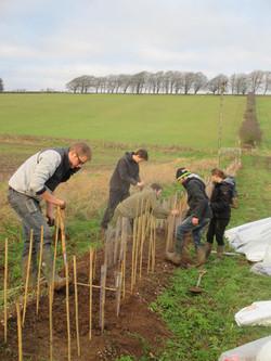 RAU planting Rockley