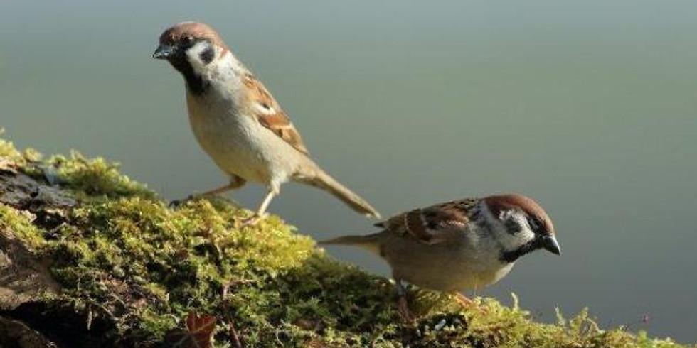 Farmland bird walk
