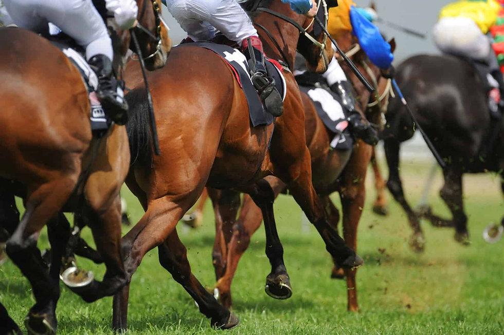 racehorses-legs.jpg