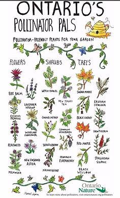 Ontario Pollinator Pals