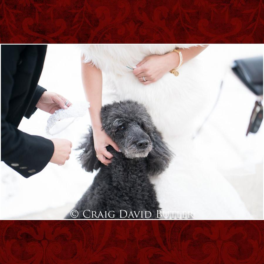 Wedding - Dog Photos, Craig David Butler
