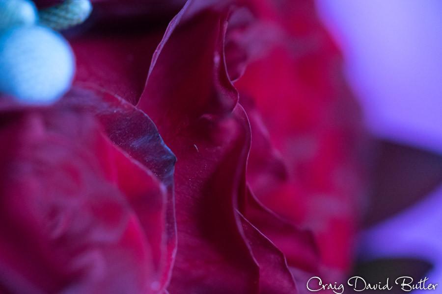 Roses in the bride bouquet Masonic Temple Detroit MI- Wedding Photographer Craig David Butler