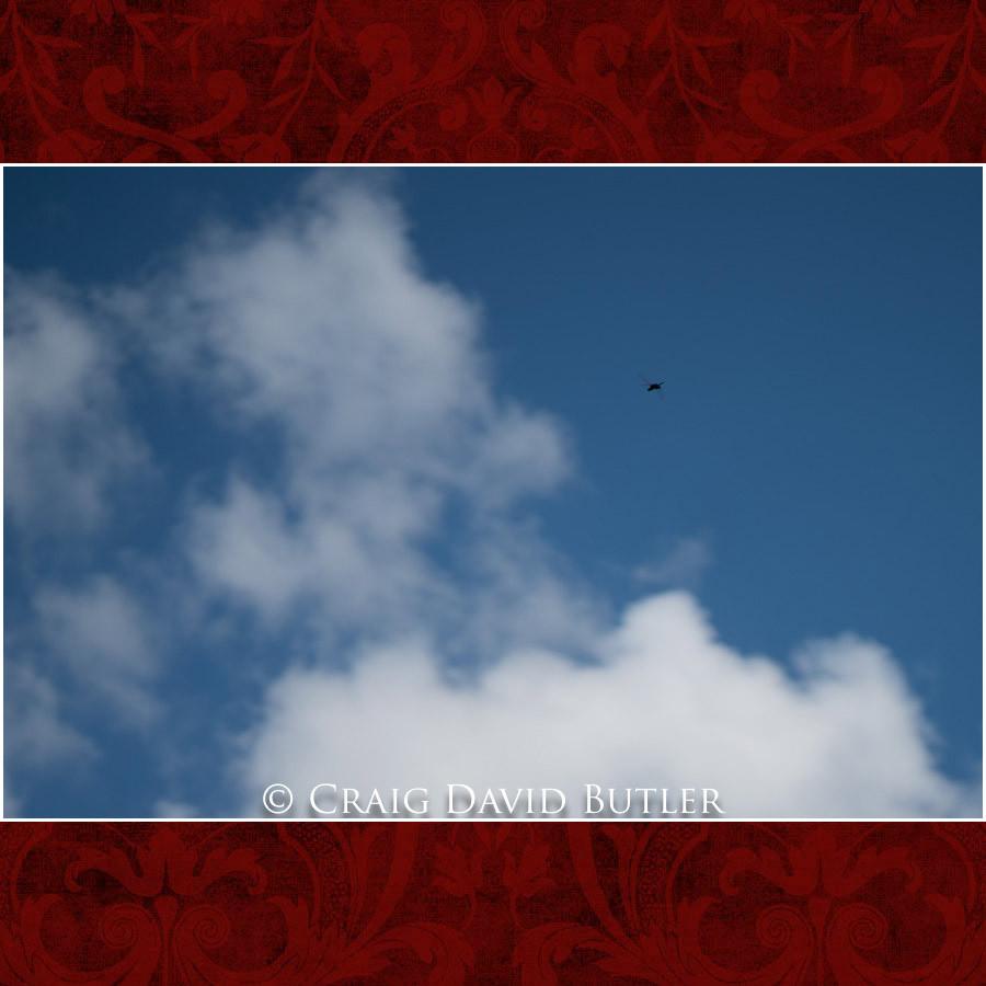 Dragon Fly - Clarkston Wedding Photographer - Oakhurst CC, Craig David Butler
