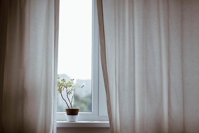 Window with Plant